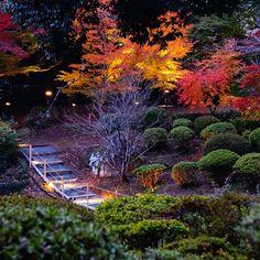 #photgraphy #camera #nex3n #nature #saga #Mifuneyama #ミラーレス #カメラ好きと繋がりたい
