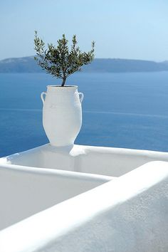 Simplicity. White, blue and an olive tree...Greece