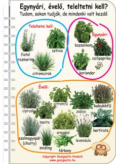 backyard designs – Gardening Ideas, Tips & Techniques Herb Garden In Kitchen, Home Vegetable Garden, Succulents Garden, Garden Plants, Back Garden Landscaping, Garden Forum, Organic Gardening Magazine, Landscape Design Plans, Ornamental Grasses