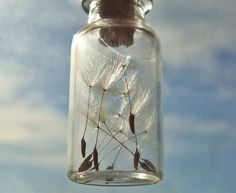 dandelion seeds in a tiny jar necklace :)
