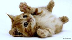 chat trop chou!