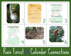 Free RAIN FOREST Calendar Connections Printables from www.1plus1plus1equals1.net