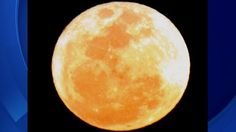 """South Florida is in for a celestial treat this weekend when the second of three supermoons this summer will be visible. The full moon on August 10th isn't like any other full moon we've seen this year. This is a """"Supermoon,"""" the closest and largest full moon in 2014. When the moon is full as … Continue reading »"""