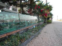 Mehmet Ali Gökçeoğlu, a businessman from Çeşme, Turkey has replaced the fence of his seaside villa with a 50-meter-long aquarium full of live fish and octopuses