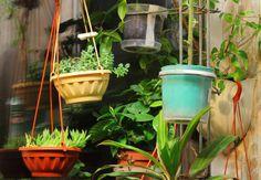 Czy rośliny doniczkowe mogą mieć wpływ na nasze życie?  Przekonaj się: http://www.zyjintensywnie.pl/mieszkanie-ktore-wyglada-kwitnaco/