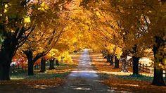 imagenes de otoño - Buscar con Google