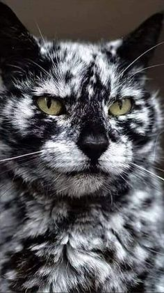 Cute Wild Animals, Cute Little Animals, Cute Funny Animals, Animals And Pets, Funny Monkeys, Cute Cats And Kittens, Baby Cats, Kittens Cutest, Pretty Cats