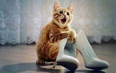 śmieszne koty - Szukaj w Google