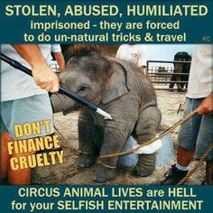 DON'T GO TO CIRCUSES OR YOU ARE ONLY SUPPORTING ANIMAL CRUELTY AND DEATH.!    Would you want to do things that are completely unnatural for your body then beaten when you don't do them or do them correctly with some evil human being who doesn't even speak your language.  Pure Evil.