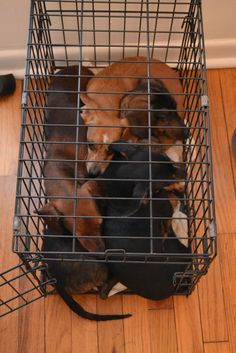 Dachshund Trap: Point space heater at crate.: D