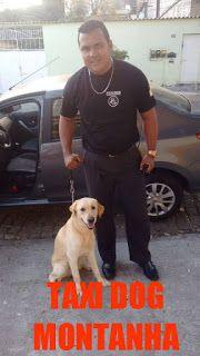 TAXI DOG MONTANHA TRANSPORTE DE ANIMAIS NO RIO DE JANEIRO: NOSSO AMIGO THOR !