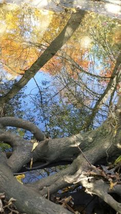 even the trees take the time to admire their beautiful fall colors in the reflection of the water