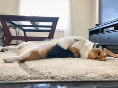 Full derp #derpalicious #dorkycorgi