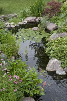 Plants Create Soft Edges in a Backyard Fish Pond