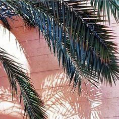 Palm trees make me H A P P Y !  #verymojo #montres #watches #palm #palmtrees #summer #beach #beachlife #sun #sunnyday ► www.verymojo.com ◄