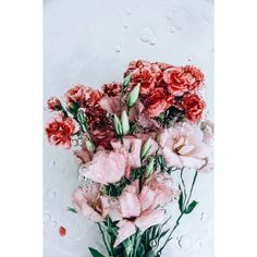 SHEEZUS ❤ liked on Polyvore featuring backgrounds, flowers, pictures, fillers and aesthetic