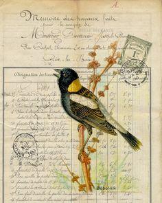 Botanical Print Bobolink – BELLAVINTAGEHOME