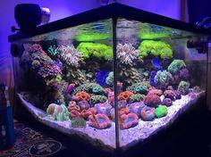 """ Lights: Reef Breeders Photon 16 Tank: 35gals display : 45gals system…"