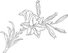 Lirio o flor de lirio Dibujo para colorear