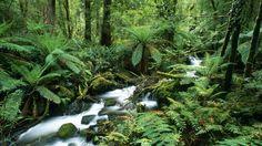 Yarra Ranges National Park, Australia - Webshots