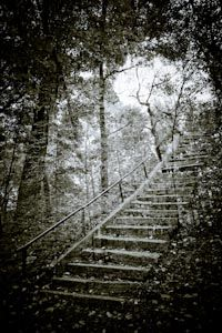 Sans-Titre -40 Photo D Art, Les Oeuvres, Photos, Stairs, Photography, Artists, Fall Season, Pictures, Stairway