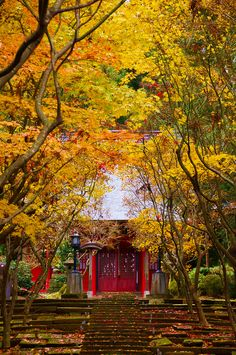 Niigata, Japan. This is so beautiful and inviting, peaceful