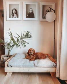 Discover recipes, home ideas, style inspiration and other ideas to try. Dog Room Decor, Bedroom Decor, Dog Bedroom, Puppy Room, Dog Rooms, First Home, My Dream Home, Home Projects, Home And Living