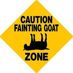 I want a myatonic fainting goat.... I'll name him Jude!!!! <3 goats