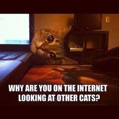 This cat is a bit of the jealous type. Source: Instagram user mariieeceleste