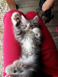 High Five - http://cutecatshq.com/cats/high-five-2/