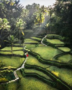 Oh Bali you are so beautiful 🌱🌱🌱 . Who is on the Bali countdown? How many days until you're on the Island of the Gods? Voyage Bali, Destination Voyage, Ubud, Beautiful Places To Travel, Cool Places To Visit, Wonderful Places, Bali Travel, Travel Trip, Land Scape