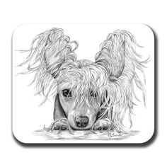 Hey, I found this really awesome Etsy listing at https://www.etsy.com/listing/56452657/chinese-crested-on-paws-dog-art-mouse