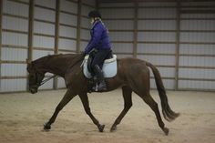 The Trick to Stretchy Trot and Topline Building |article|