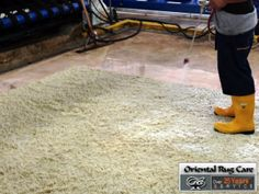 Homemade Carpet Cleaners Are Easy To Use in Homestead