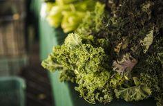 Mi fán terem? Fodros kel - Tudatos Vásárló Leaf Vegetable, Vegetable Salad, Green Kale, Fresh Green, Fresco, Close Up, Kale Plant, Vegetable Cartoon