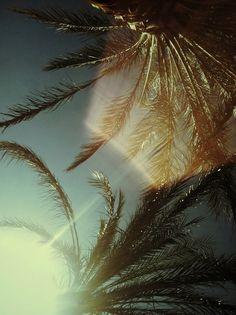 nautical design and organization : #photographs #palm trees
