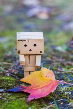 Danbo loving the fall colours