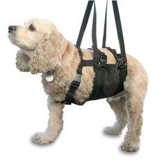 Just Found This Assistance Dog Harness Lift Assist Dog
