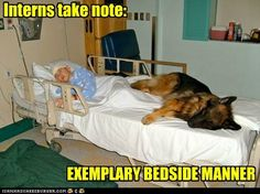 German Shepherd Hilarious | ... - child - Loldogs n Cute Puppies - funny dog pictures - Cheezburger