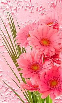 The far away from a tale of Istanbul . Daisy or in love . Access soon … - Blumen All Flowers, Exotic Flowers, Amazing Flowers, My Flower, Pretty Flowers, Wedding Flowers, Flowers Gif, Colorful Flowers, Purple Flowers