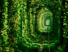 Tunnel of Love, Klevan, Ukraine (by The Guardian)