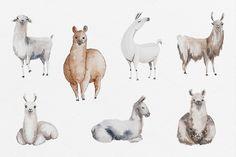Watercolor Llamas by Petite Salade on @creativemarket