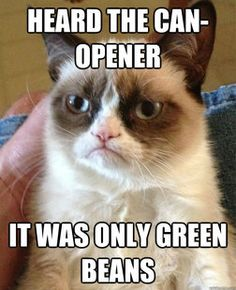 Grumpy Cat- that FACE!!  Heard the can-opener -it was only green beans (ha!)