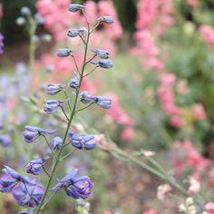 The most delicate flowers and colours together www.agathavieira.net/kewgardens #flowers #botanicalgarden #royalgarden #kewgardens #pinkandpurple #nature