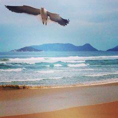 """Brésil - Florianopolis """"Floripa"""" et ses splendides plages brésiliennes https://picsandtrips.wordpress.com/2015/01/13/florianopolis/"""