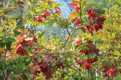 Natural Cranberry Wreath Photograph by Jim Sauchyn