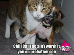You on probation son