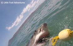 Sharks are with no doubt one of the scariest and deadliest animals in the world. Diving with Great White Sharks in Gansbaai made me demystify my fears. The Great White, Great White Shark, Deadliest Animals, Deadly Animals, Animals Of The World, Sharks, Diving, South Africa, Pictures