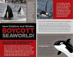 Come everyone! Animals are not entertainment! If we all work together and boycott Sea World, this abuse will be over.