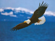 REFLEXÃO DO DIA: Parábola : A Águia